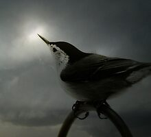 Nuthatch Awaiting the Sun by PineSinger