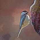 Chickadee by Eileen McVey