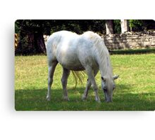 Plantation Horse Canvas Print