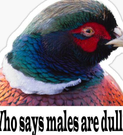 Who says males are dull? Sticker