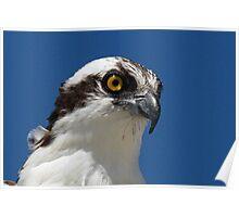Osprey profile 2 Poster