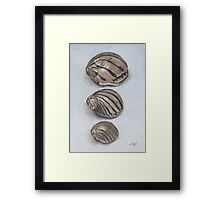 ZEBRA SHELLS Framed Print