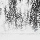 Snowy Evergreens by Mohini Patel Glanz