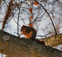 Waiting for Spring by Keala