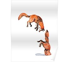 Jumping Red Fox Poster