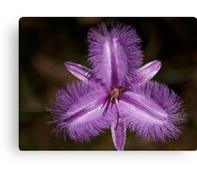 Fringe Lilly Canvas Print
