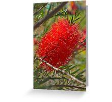 Red Bottle Brush Greeting Card