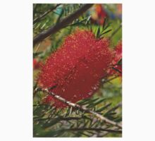 Red Bottle Brush Kids Clothes