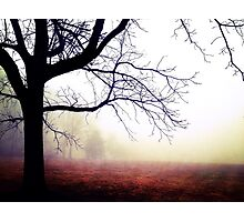Hazy Tree Photographic Print