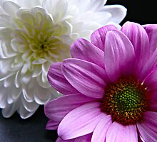 Chrysanthemum and Daisy by Shellie Phipps