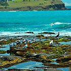 Terns at Black Rock by Penny Smith