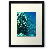 Reef at the Red Sea Framed Print