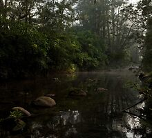Kangaroo Valley - Peacefull Creek view 01 by Timothy Kenyon