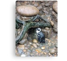 The Penguins Home Canvas Print