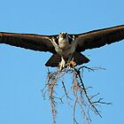 Nest Building 2 by jozi1