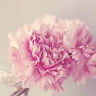 Dreamy Carnations  by Nicola  Pearson