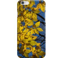 Sapphire and Gold - Blue Sky, Golden Leaves & Bright Sunlight iPhone Case/Skin