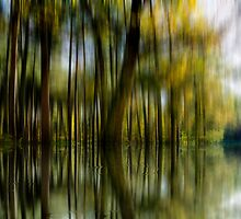 The Flooded Forest by PhilipRJones