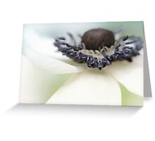 Gorgeous Anemone.... Greeting Card