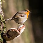 Robin Red Breast by Margaret S Sweeny