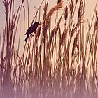 Raven in the reeds by Amber Williams