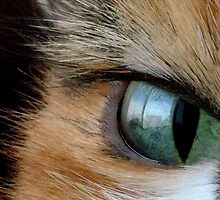 CAT EYE by Betsy  Seeton