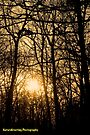 Golden Woods by NatureGreeting Cards ©ccwri