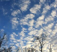Evening Sky by NatureGreeting Cards ©ccwri