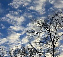 Evening Sky 0092 by NatureGreeting Cards ©ccwri