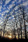 Evening Sky 0095 by NatureGreeting Cards ©ccwri