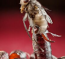 House Fly Hatching by Dan Dexter