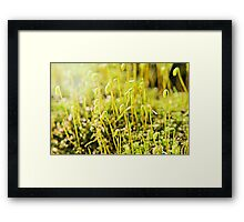 The Macro Forest Framed Print