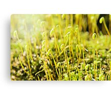 The Macro Forest Canvas Print