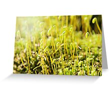 The Macro Forest Greeting Card
