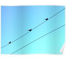 Blue. Birds. Poster