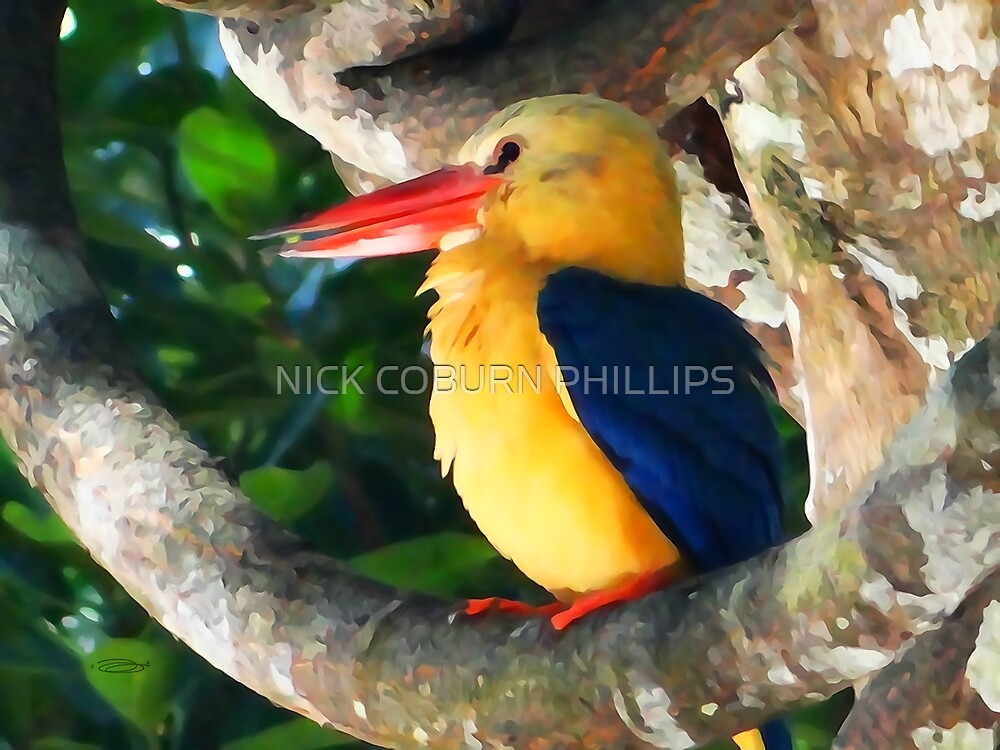 THE GREAT KINGFISHER by NICK COBURN PHILLIPS
