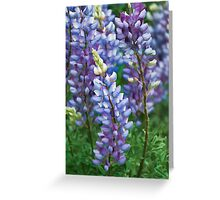 Dancing Lupines - Spring In Central California Greeting Card