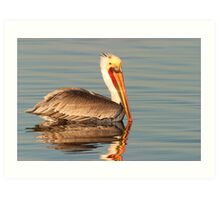 California Brown Pelican Art Print