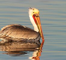 California Brown Pelican by Ram Vasudev