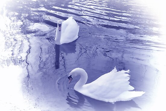 On Purple Pond,,,,,,,,,,,,,,, by lynn carter