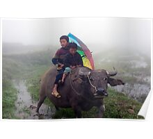 Sapa, Boys and Water Buffalo, Vietnam. Poster