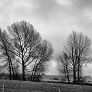 TREES by abmay