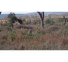 Kruger Park South Ari Photographic Print