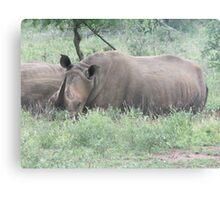 Kruger Park South Africa Canvas Print