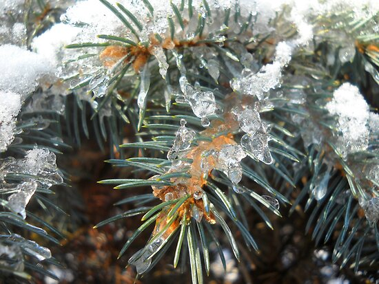 Winter Pine by Vitta