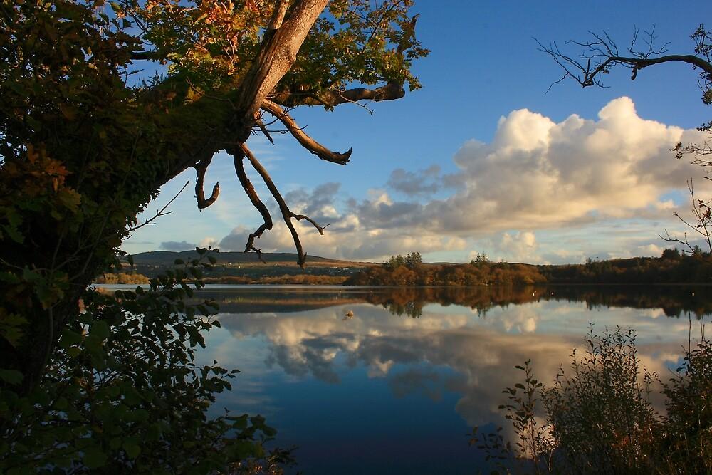 Lough Eske Shore by Adrian McGlynn