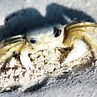 Crabby Crab by Polly Peacock
