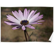 Daisy lilac dreams... Poster