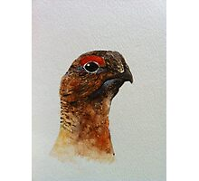 Grouse Watercolour Design  Photographic Print