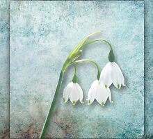 Snowdrop by Lynn Bolt